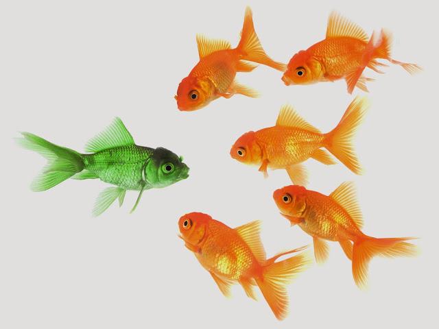 green_goldfish_1600x1200